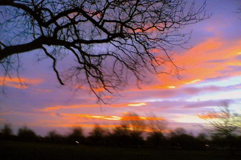 Strom, obloha, západ slnka